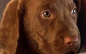 14 Things New Dog Owners Should Know